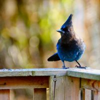 The Visitor by charliesmyangel