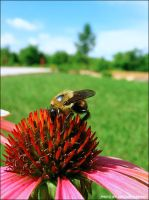 Busy Bee by Duratec
