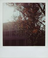 SX-70 polaroid 84 of 100 by lloydhughes