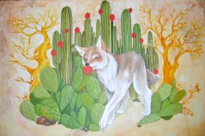 coyote entre pitahayas by candie1