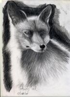 Young Fox by Durianssmellnice
