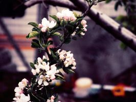 blossoms 3 by MissJane01