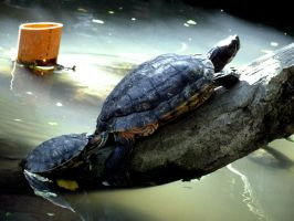 mother turtle and her little turtle by zerlincute