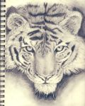 Tiger Drawing By TigerTiz26 by TigerTiz26