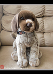 .: Douglas German ShortHaired Pointer :. by Dunkin-Prime