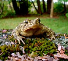 The Toad Croaked... by Arven-Girl