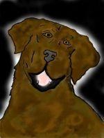 My Favorite Lab-Colorized by K9girl06