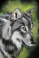WOlf by Tomek3618