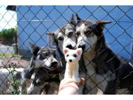 We want this felted husky by Pawkeye