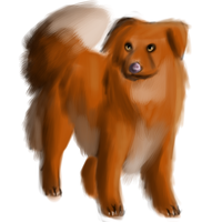 Nova Scotia Duck Tolling Retriever by SanjanaStone