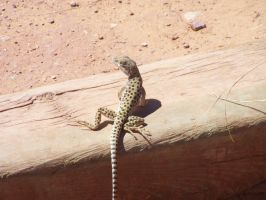 Spotted Lizard by Wiffink
