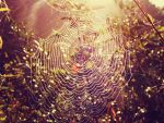 spider's web by just-shameless