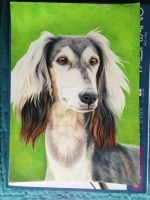 Saluki Portrait by recycled-batteries