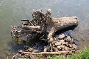 Floating Tree stump by dknucklesstock