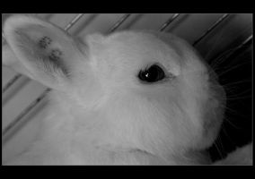 Rabbit.. by 8LittlePsycho8
