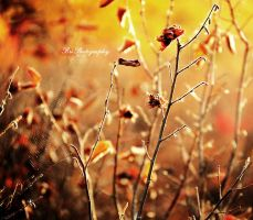 A Spiders Morning by PhotographsByBri