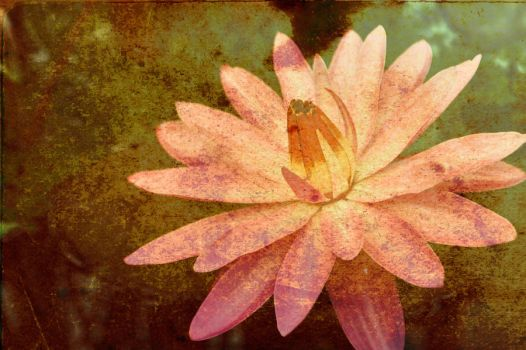 water lily by sabrinahasthestars