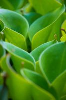 Succulant green by spydawebm