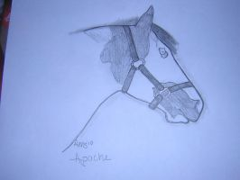 Horse Art... by strainam