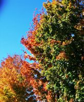 Fall leaves by PureIdiocy