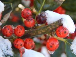 Chilled Berries by superSeether
