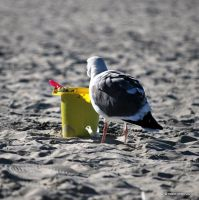 Play Time for Seagull by meihua