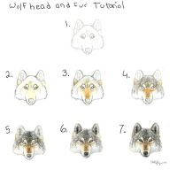 Wolf head and fur tutorial by autumnjaguar