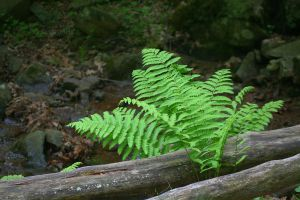 Simple Ferns by desmo100