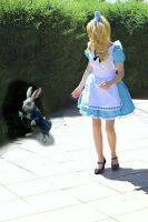 Down the Rabbit Hole by zoellen