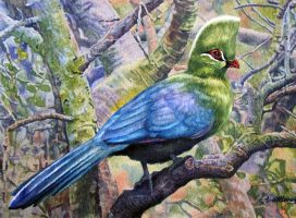 Knysna Turaco by WillemSvdMerwe