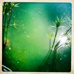 Cool and Green by ZandyPop