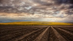 asparagus and rapeseed by Ditze