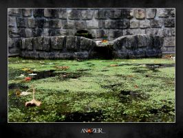 VEGETAL WATER by ANOZER