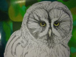 Great Gray Owl by originALLIty