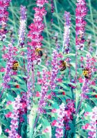 Pink Bees by annavalerie