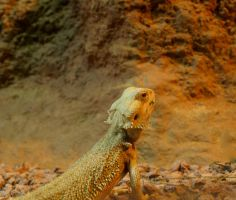 Bearded Dragon by gee231205