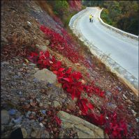Fragrant hills red leaf by DeviCrosis