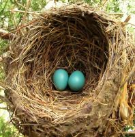 Robin Eggs by JMcCarty09
