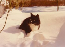 Cat in snow by DrPatte