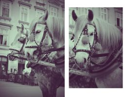 Cracow by Norriko