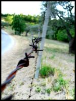 Barbed Wires by Raphaero
