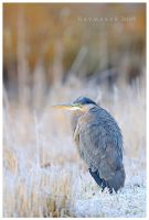 Frosty Heron by Raymaker