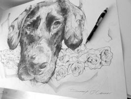 Labrador Drawing by ART-BY-DOC