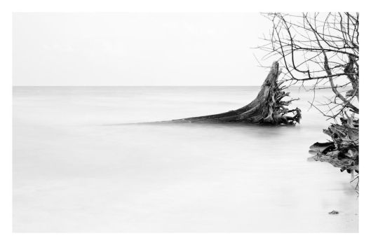 Tsunami damaged trees at Andaman by derozio