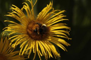 Daisy And Friend by Tinap