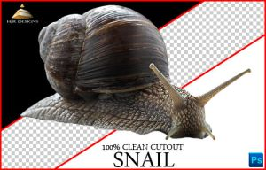 Snail Cutout by HJR-Designs