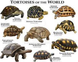 Tortoises of the World by rogerdhall
