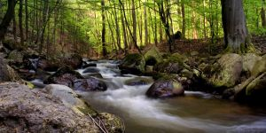 spring at Ilsetal III by stg123