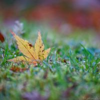 Autumnal Composition by Kancano