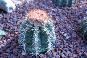 Tiny cactus by Emerald-tiger12